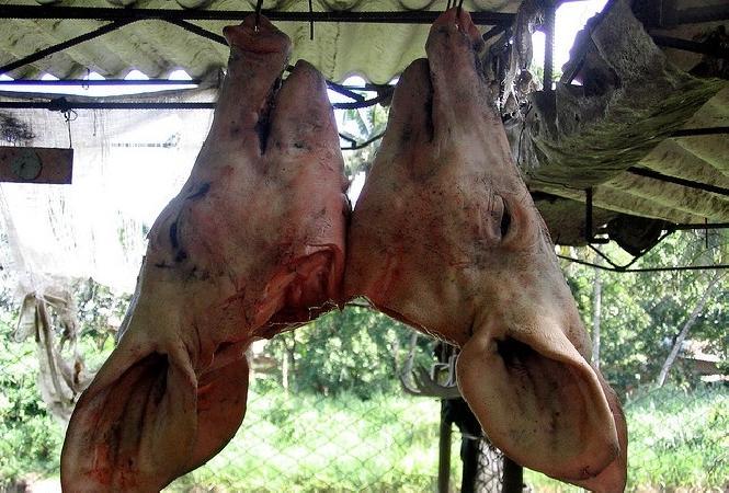têtes de porc Hazebrouck