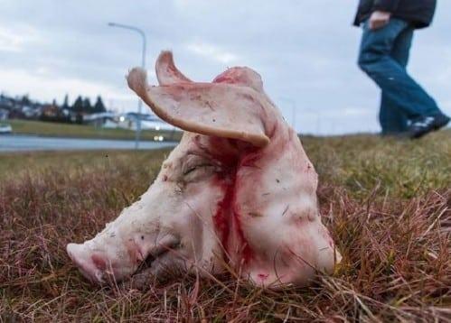 Tête de porc sur le terrain de la future mosquée de Reykjavik