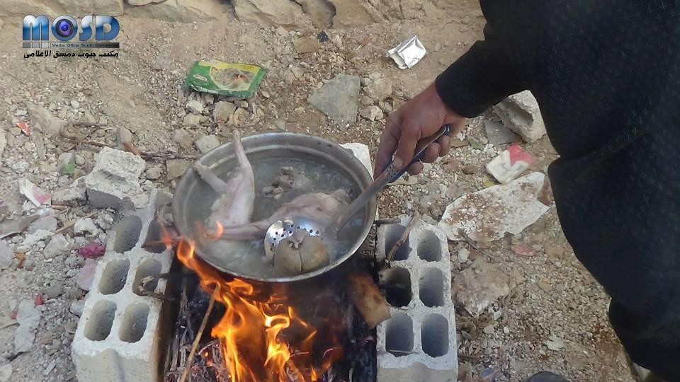 Des syriens cuisinent des chats
